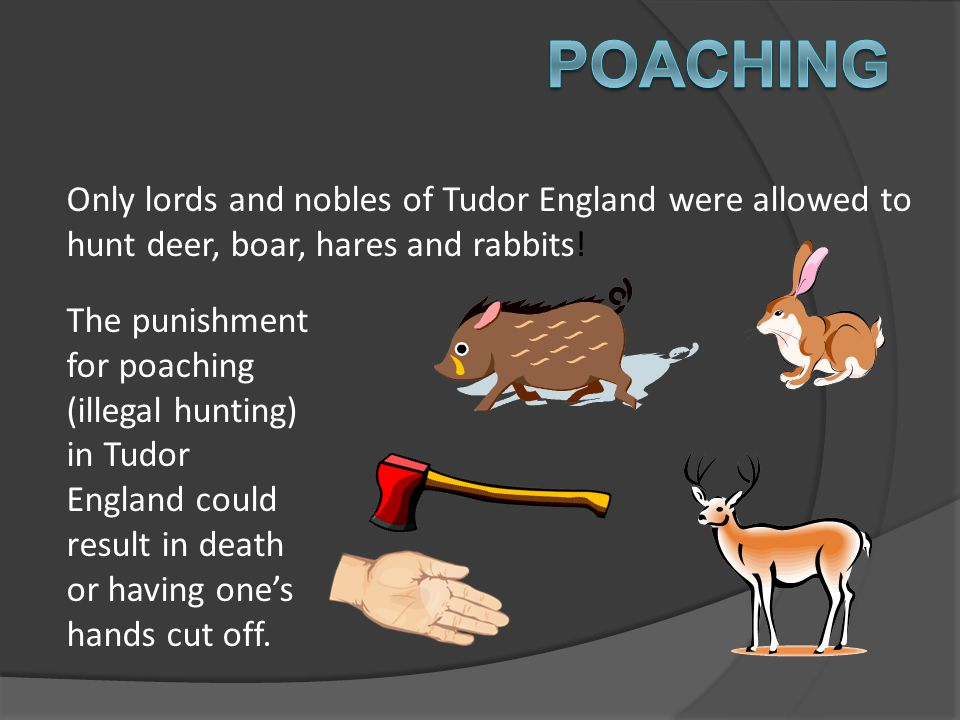 Poaching Only lords and nobles of Tudor England were allowed to hunt deer, boar, hares and rabbits!
