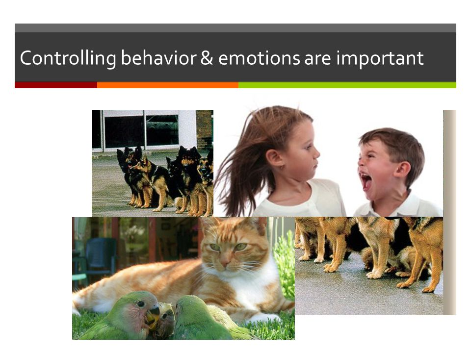 Controlling behavior & emotions are important