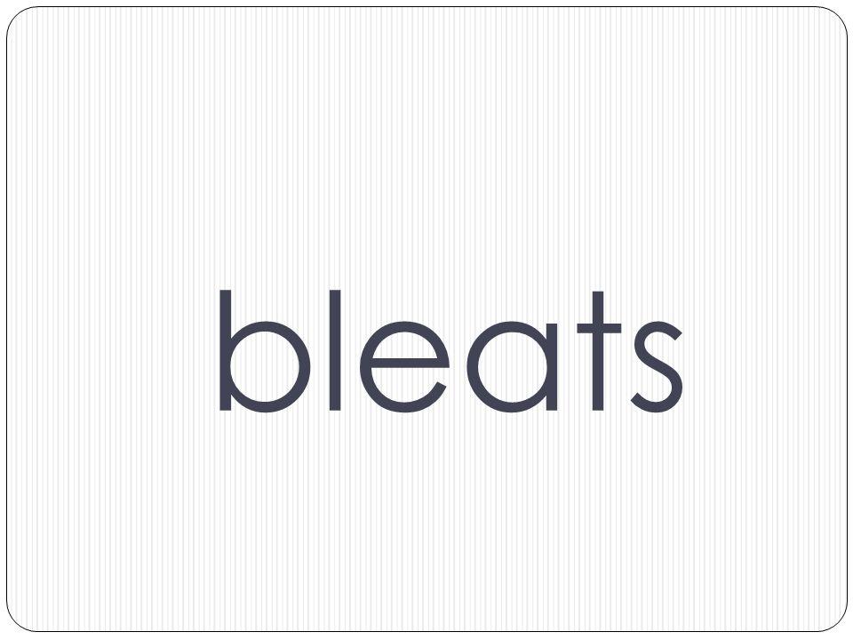 bleats