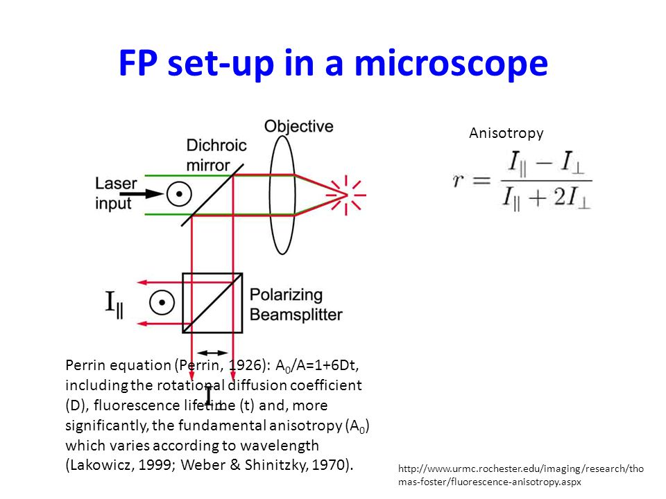 FP set-up in a microscope