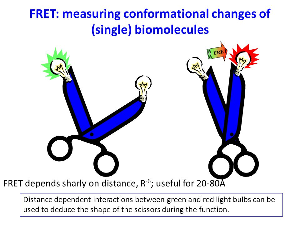 FRET: measuring conformational changes of (single) biomolecules