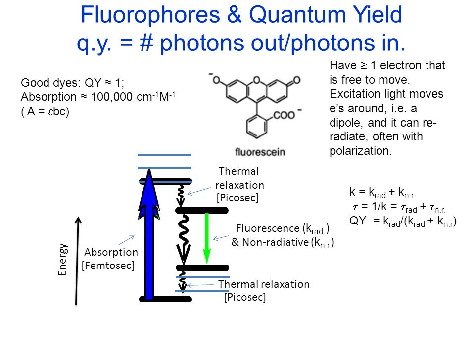 Fluorophores & Quantum Yield q.y. = # photons out/photons in.