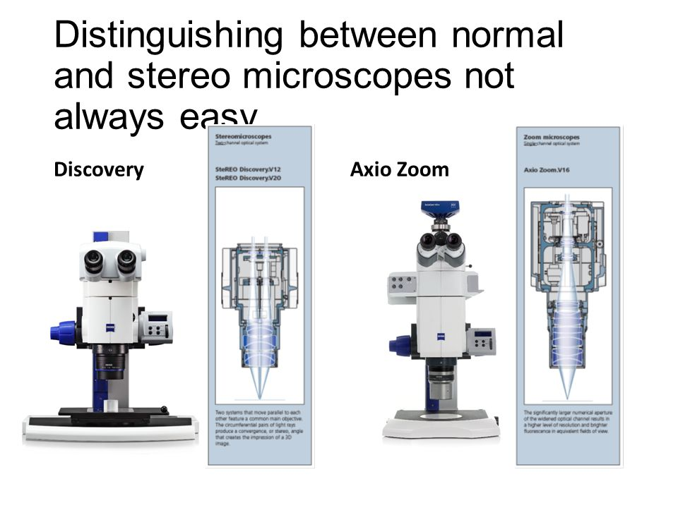 Distinguishing between normal and stereo microscopes not always easy