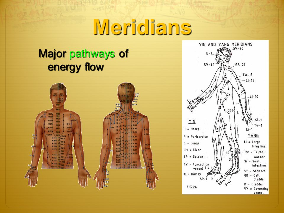 Meridians Major pathways of energy flow 5