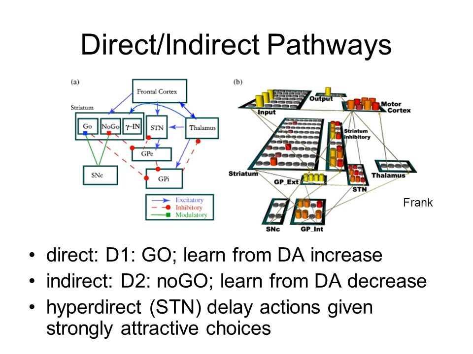 Direct/Indirect Pathways