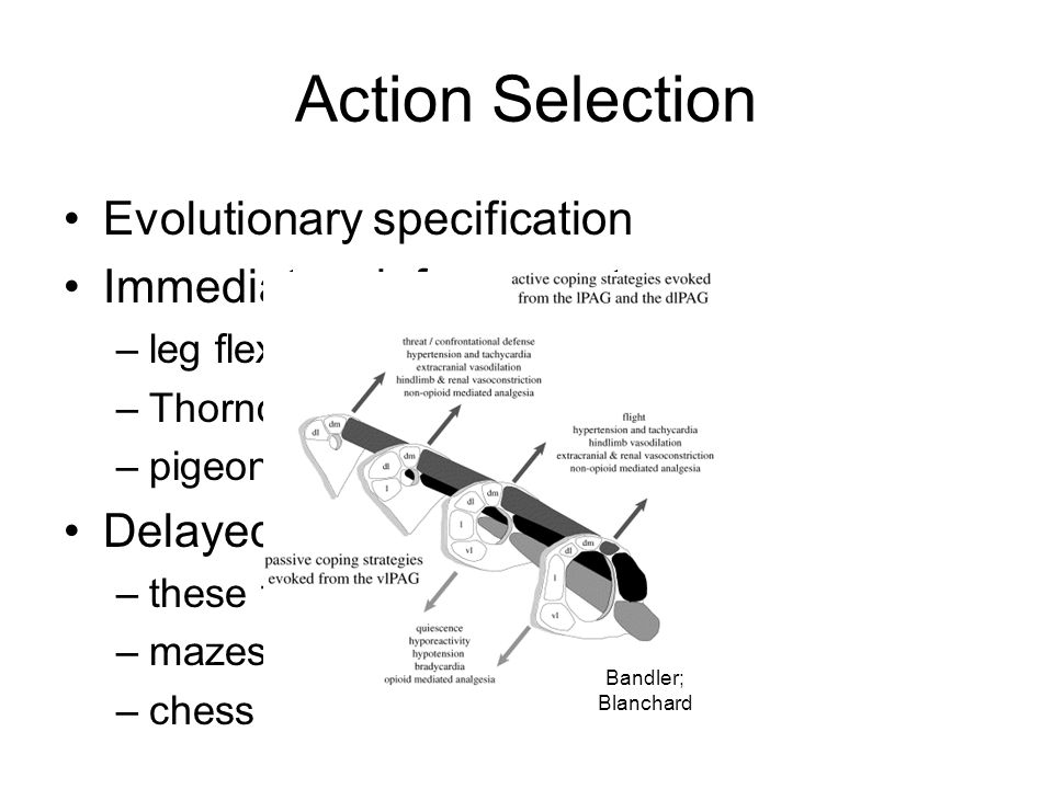 Action Selection Evolutionary specification Immediate reinforcement: