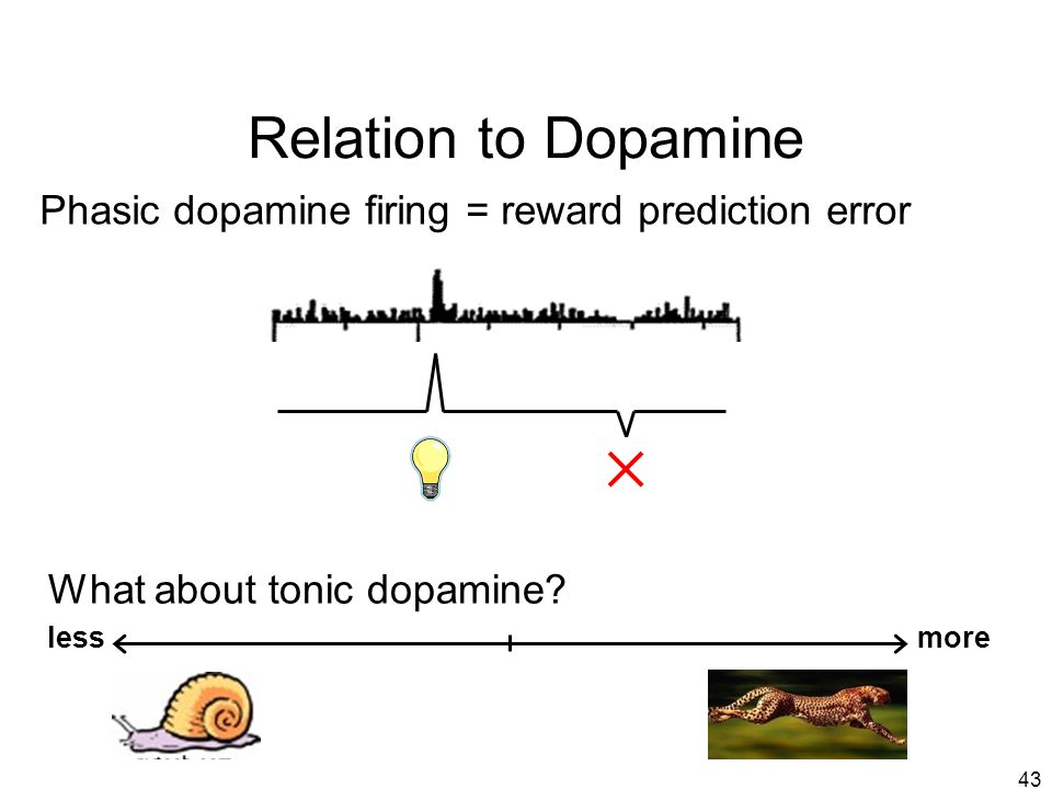 Relation to Dopamine Phasic dopamine firing = reward prediction error
