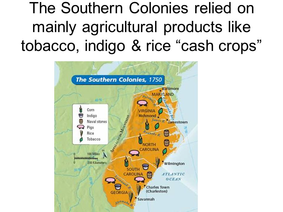The Southern Colonies relied on mainly agricultural products like tobacco, indigo & rice cash crops