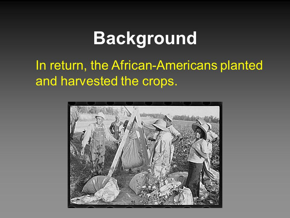 Background In return, the African-Americans planted and harvested the crops.
