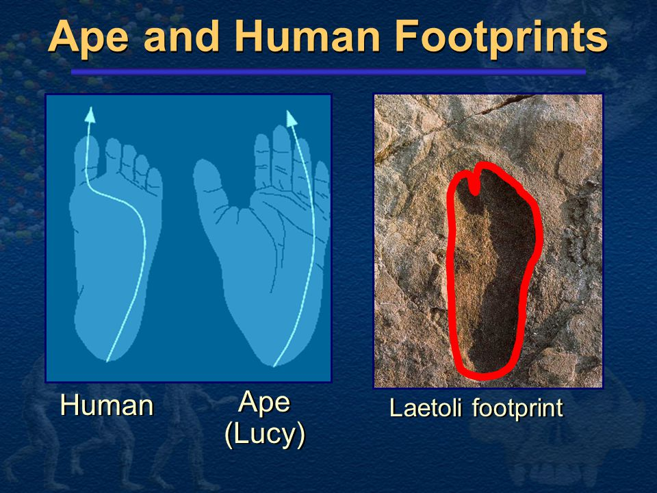 Ape and Human Footprints