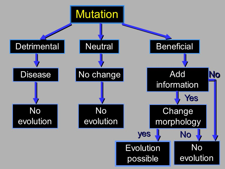 Mutation Detrimental Neutral Beneficial Disease No evolution No change