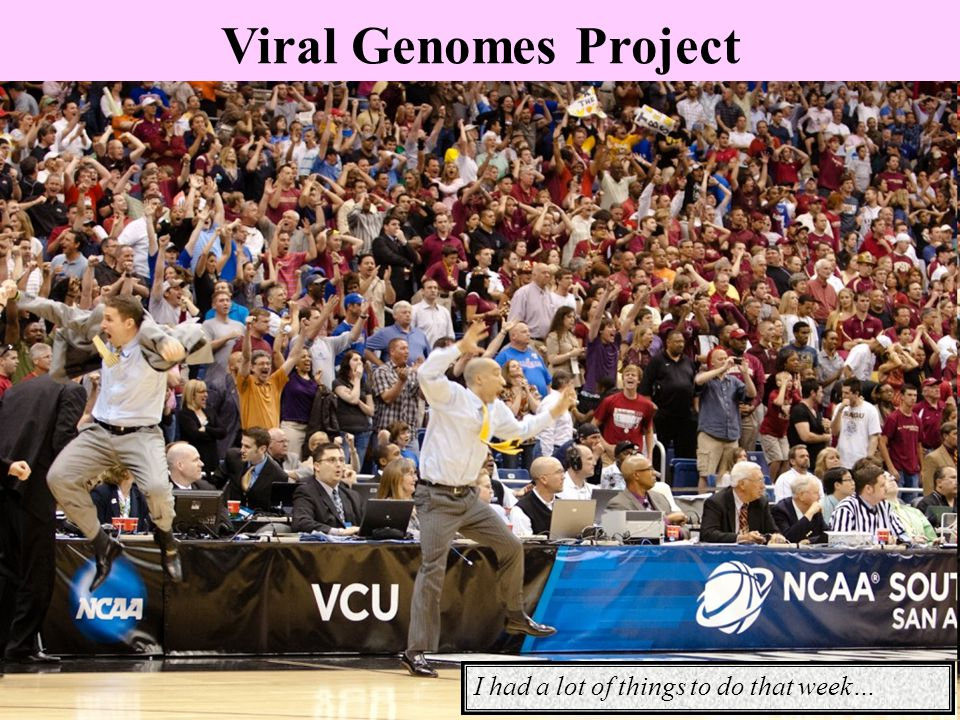 Viral Genomes Project I had a lot of things to do that week…