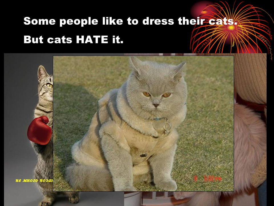 Some people like to dress their cats. But cats HATE it.