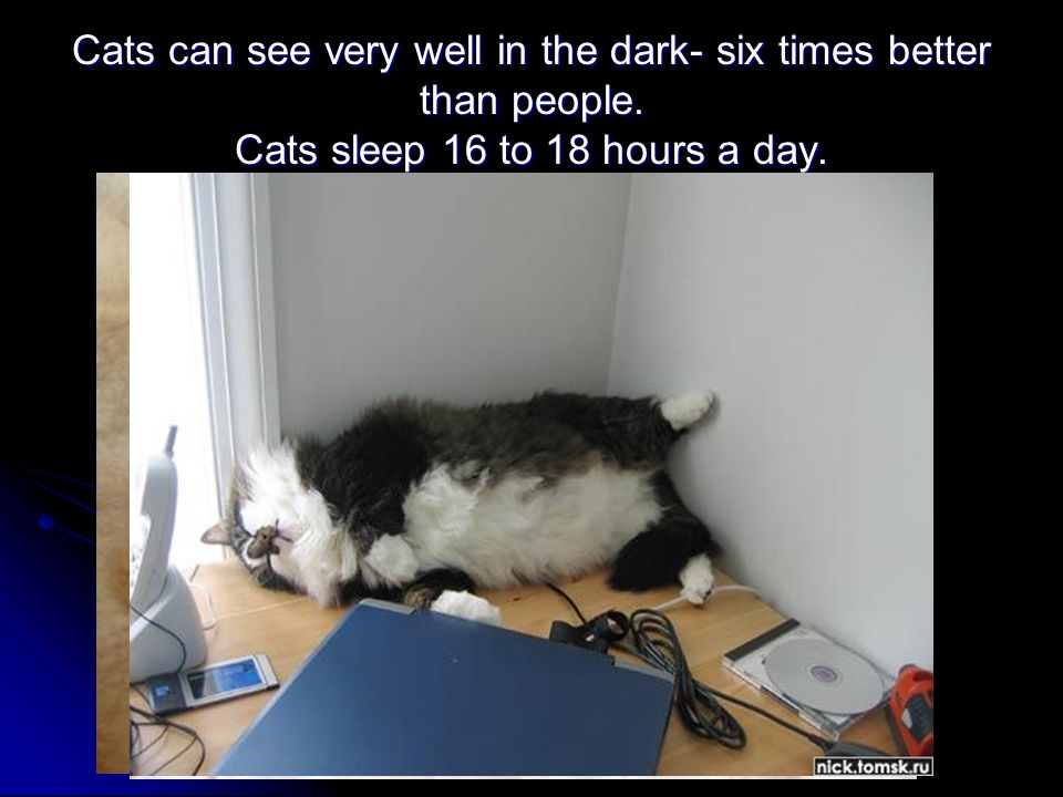Cats can see very well in the dark- six times better than people