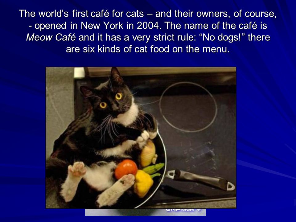 The world's first café for cats – and their owners, of course, - opened in New York in 2004.