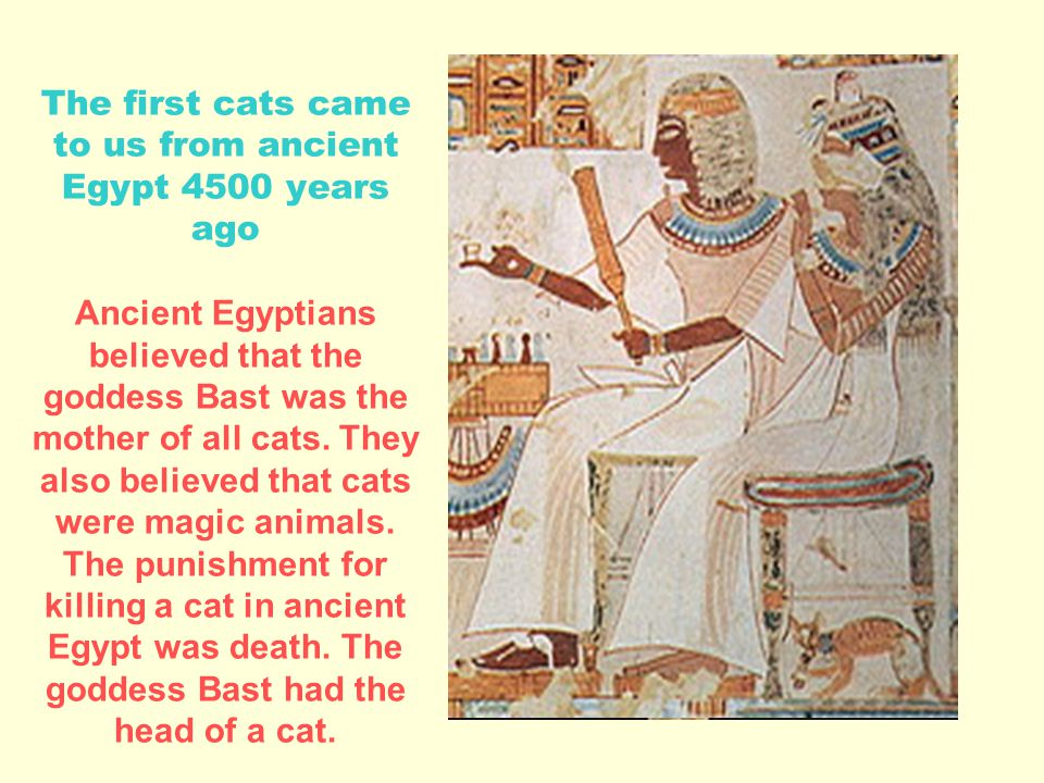 The first cats came to us from ancient Egypt 4500 years ago Ancient Egyptians believed that the goddess Bast was the mother of all cats.
