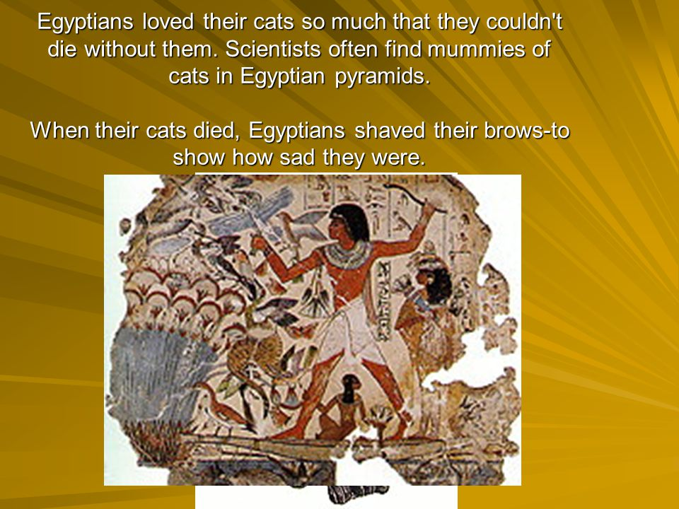 Egyptians loved their cats so much that they couldn t die without them