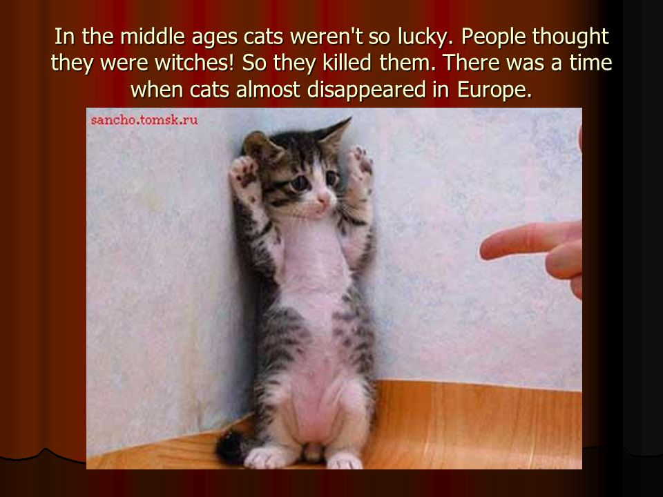 In the middle ages cats weren t so lucky