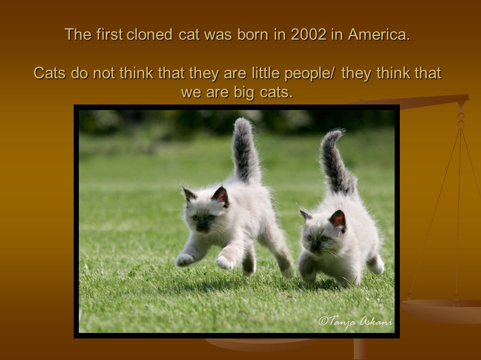 The first cloned cat was born in 2002 in America