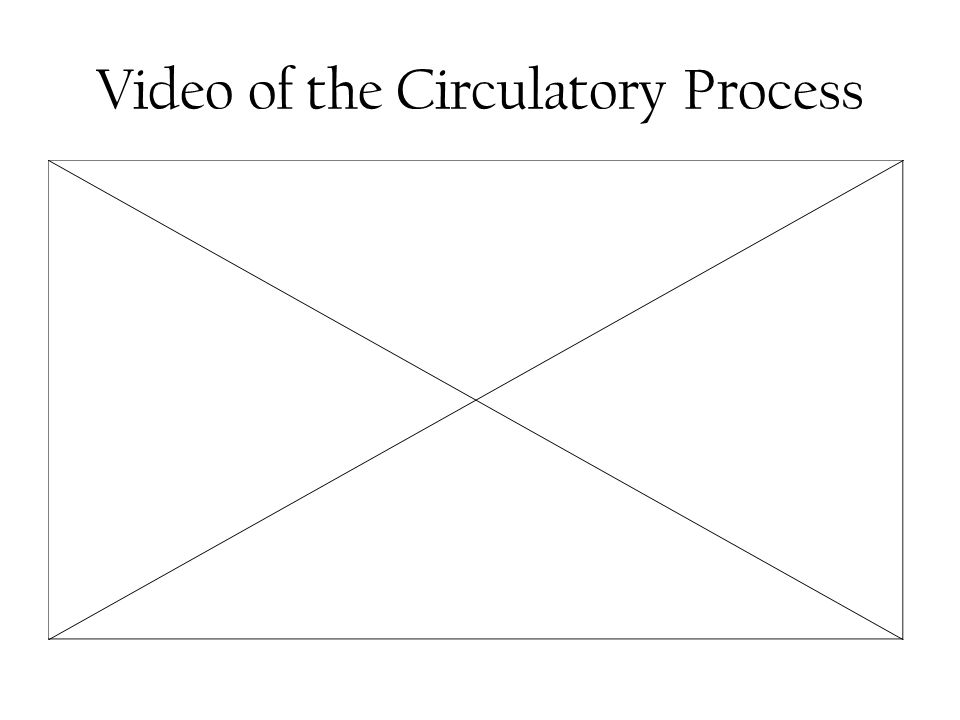 Video of the Circulatory Process