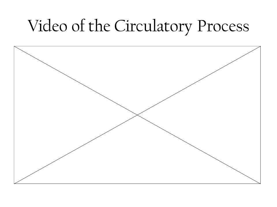 Video of the Circulatory Process