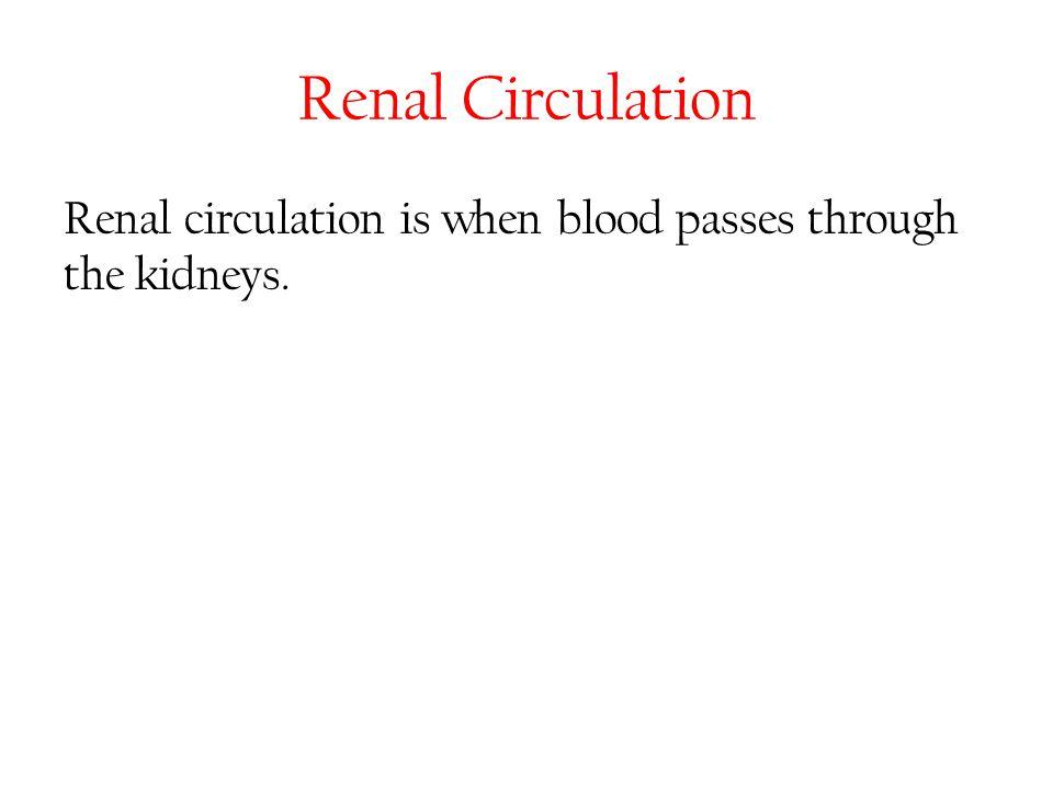 Renal Circulation Renal circulation is when blood passes through the kidneys.