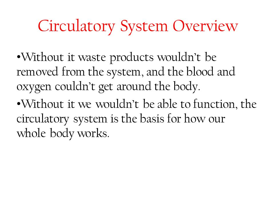 Circulatory System Overview