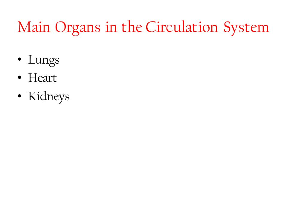 Main Organs in the Circulation System