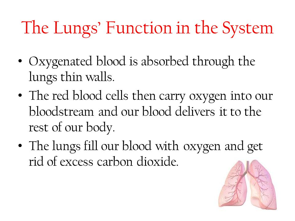The Lungs' Function in the System