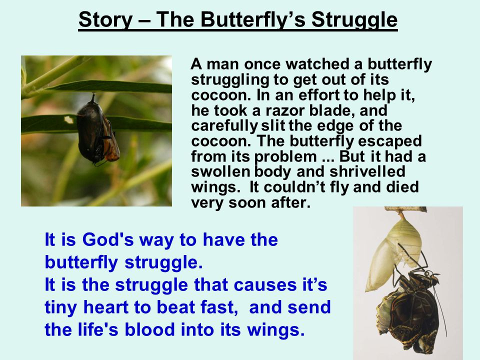 Story – The Butterfly's Struggle