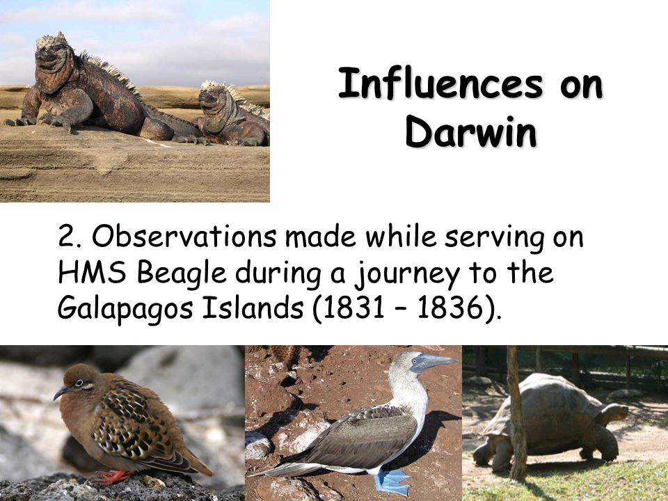Influences on Darwin 2.