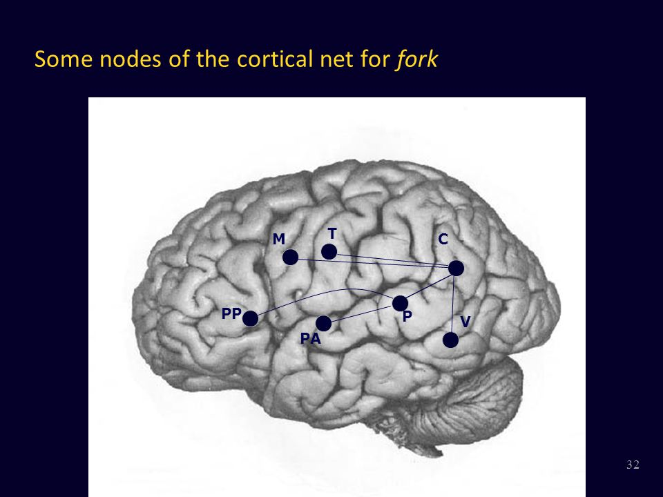 Some nodes of the cortical net for fork