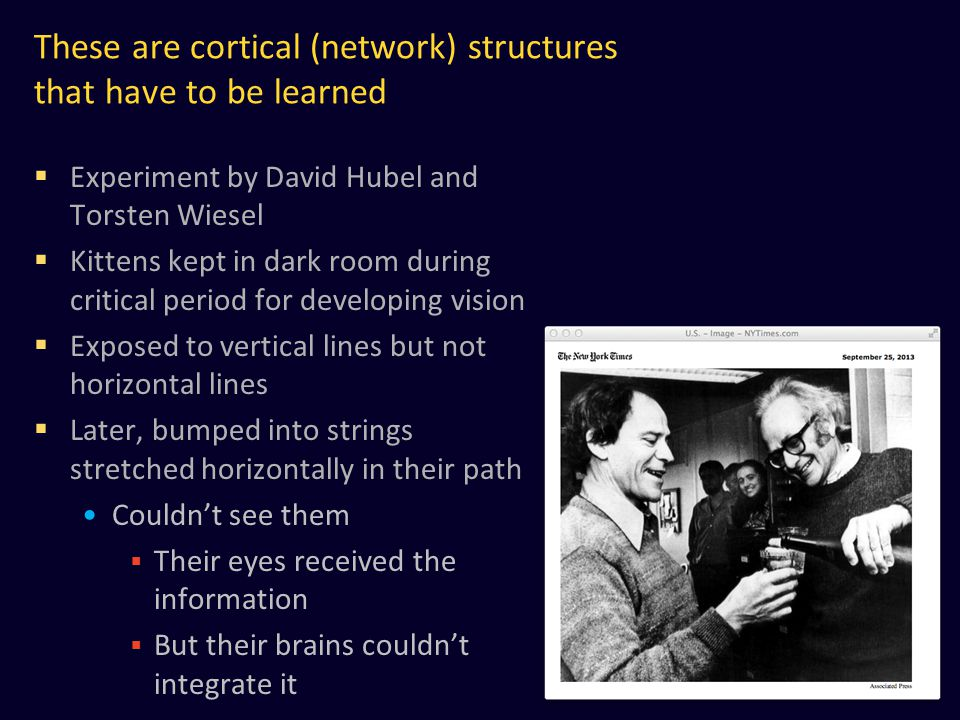 These are cortical (network) structures that have to be learned
