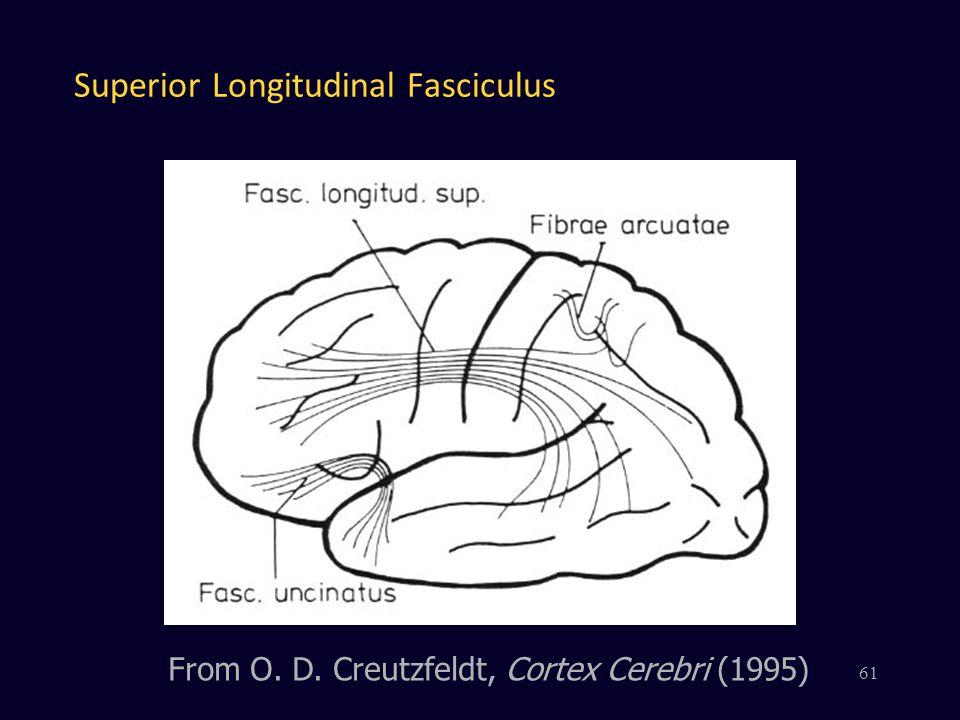 Superior Longitudinal Fasciculus