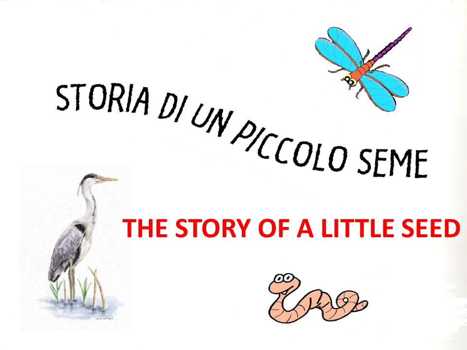THE STORY OF A LITTLE SEED