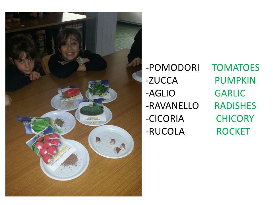 -POMODORI TOMATOES -ZUCCA PUMPKIN. -AGLIO GARLIC. -RAVANELLO RADISHES.