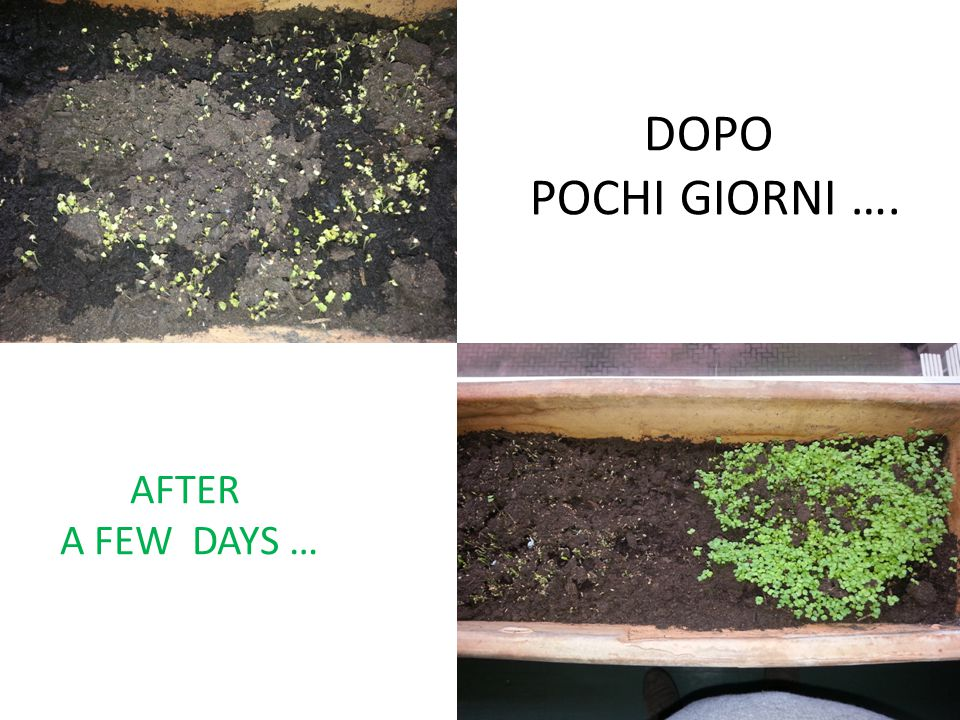 DOPO POCHI GIORNI …. AFTER A FEW DAYS …