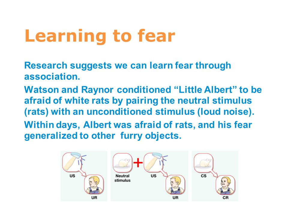 7 Learning to fear. Research suggests we can learn fear through association.