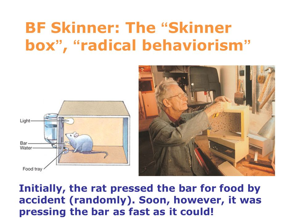 BF Skinner: The Skinner box , radical behaviorism