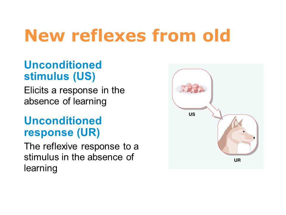 7 New reflexes from old Unconditioned stimulus (US)