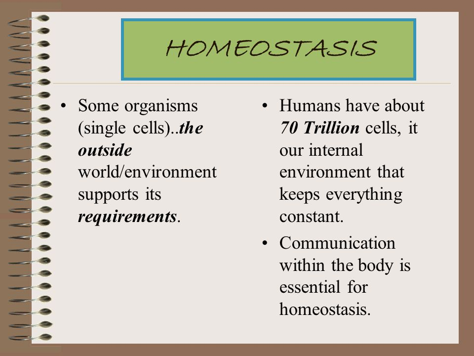 HOMEOSTASIS Some organisms (single cells)..the outside world/environment supports its requirements.