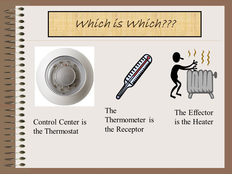 Which is which Which is Which The Thermometer is the Receptor