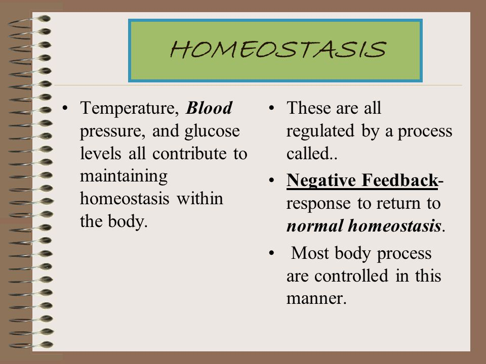 HOMEOSTASIS Temperature, Blood pressure, and glucose levels all contribute to maintaining homeostasis within the body.