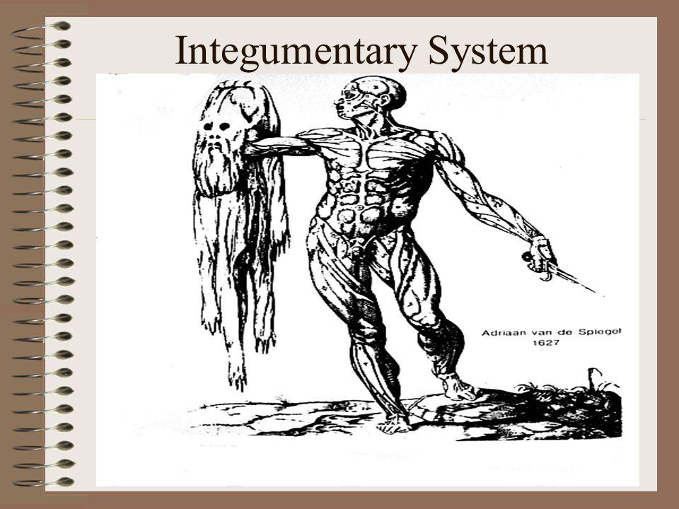 Integumentary System Integumentary System