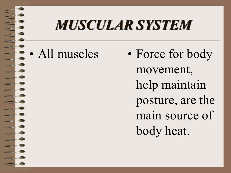 MUSCULAR SYSTEM All muscles