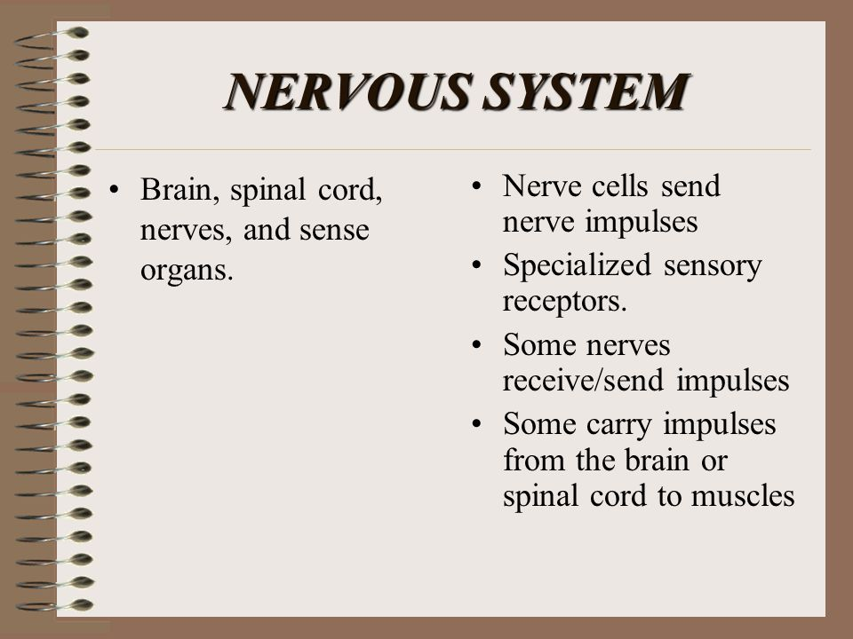 NERVOUS SYSTEM Brain, spinal cord, nerves, and sense organs.