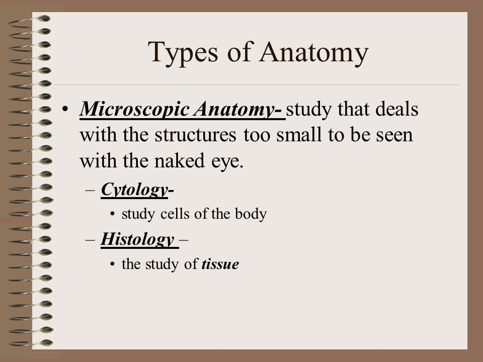 Types of Anatomy Microscopic Anatomy- study that deals with the structures too small to be seen with the naked eye.