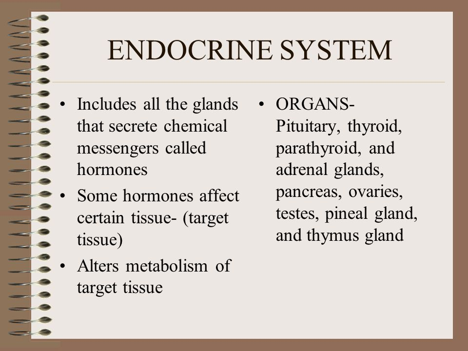 ENDOCRINE SYSTEM Includes all the glands that secrete chemical messengers called hormones. Some hormones affect certain tissue- (target tissue)