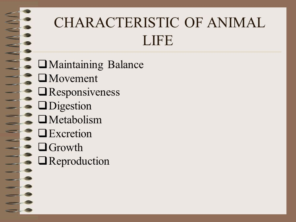 CHARACTERISTIC OF ANIMAL LIFE