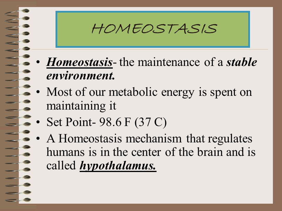 HOMEOSTASIS Homeostasis- the maintenance of a stable environment.